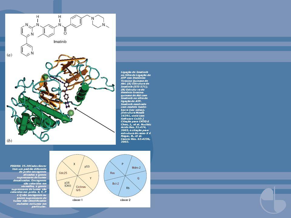 Ligação de Imatinib no Sítio de Ligação de ATP nos Domínios Tirosina Quinase de Abl. (A) Estrutura de Imatinib (STI-571). (B) Estrutu-ra do domínio tirosina quinase de Abl com Imatinib no sítio de ligação de ATP. Imatinib mostrado com modelo haste-barra (ver setas). [Estrutura Mmdb 16291, vista com Software Cn3D.] Citação para CN3D é Chen, J., et al. Nucleic Acids Res. 31:474, 2003, e citação para estrutura de raios-X é Nagar, B., et al. Cancer Res. 62:4236, 2002.